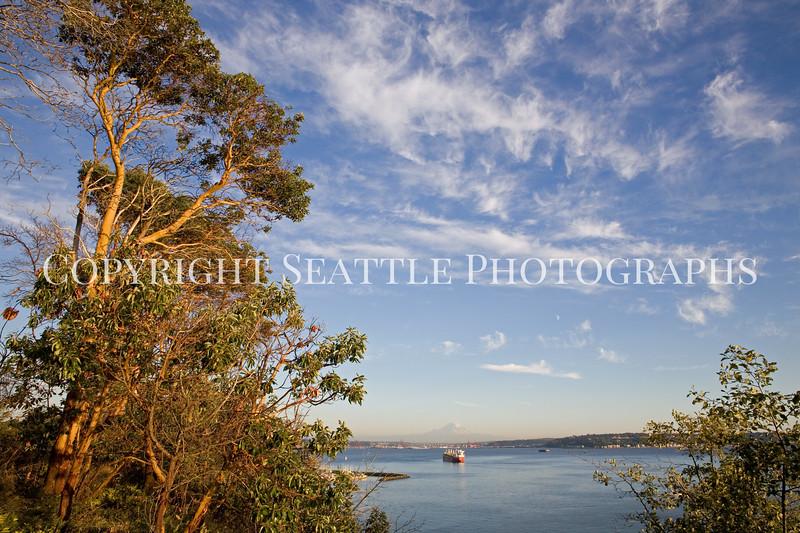 Magnolia View 106