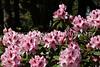 Hamilton Park Flowers 109
