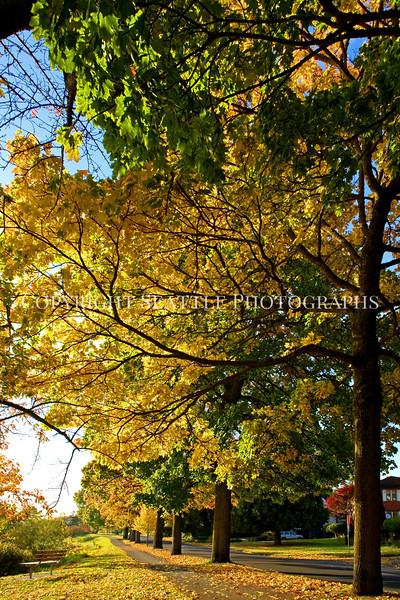 Lake Washington Autumn 112