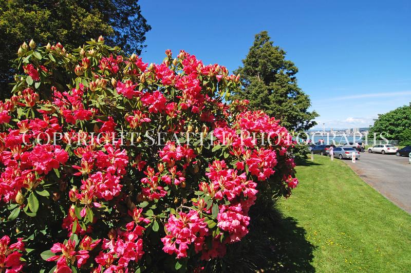 Hamilton Park Flowers 5