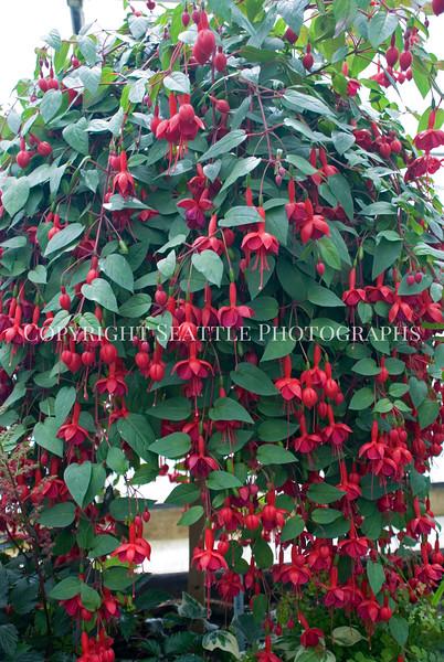 Vonunteer Park Flowers 6