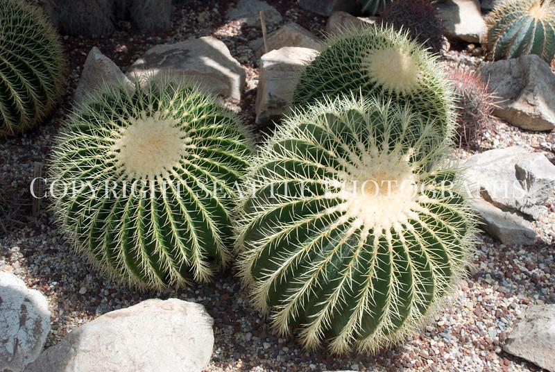 Volunteer Park Cactus 5