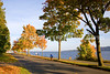 Lake Washington Autumn 109