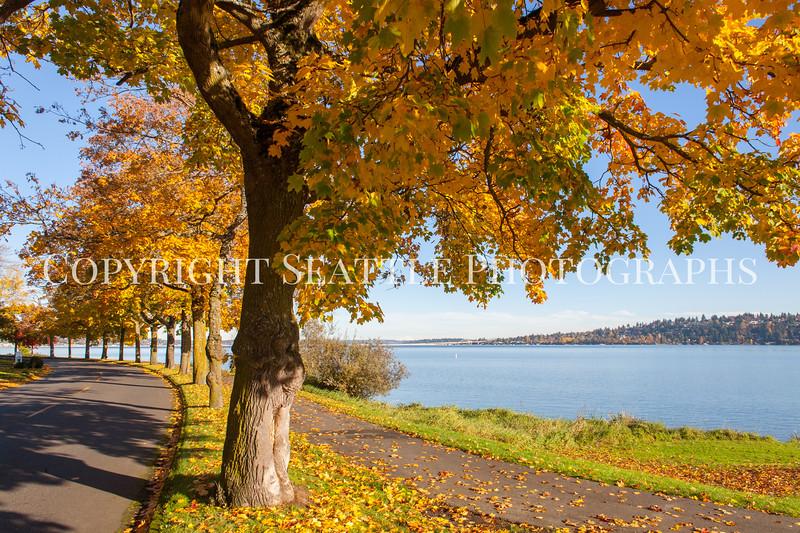 Lake Washington Autumn 130