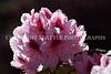 Hamilton Park Flowers 103