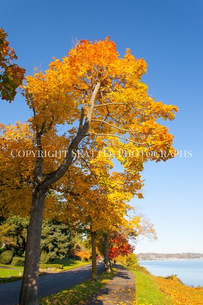 Lake Washington Autumn 133