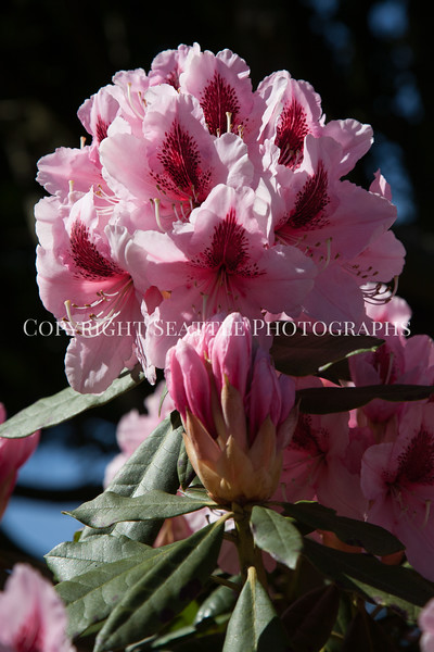 Hamilton Park Flowers 111