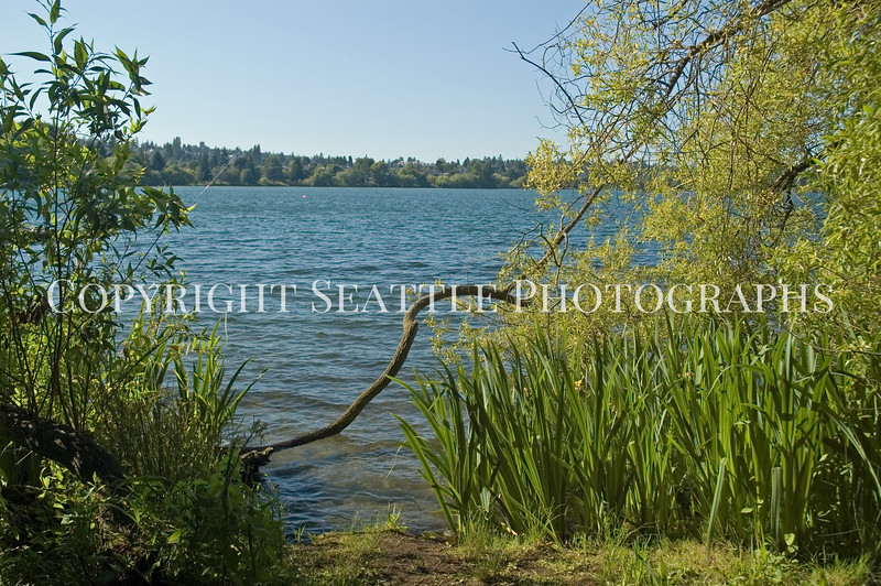 Green Lake Shoreline 3