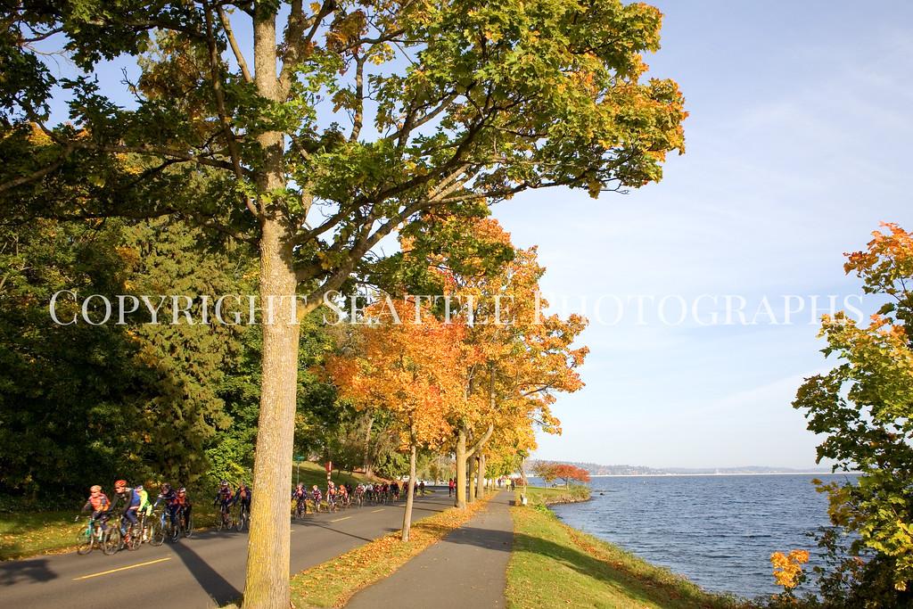 Lake Washington Autumn 105