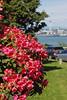 Hamilton Park Flowers 9