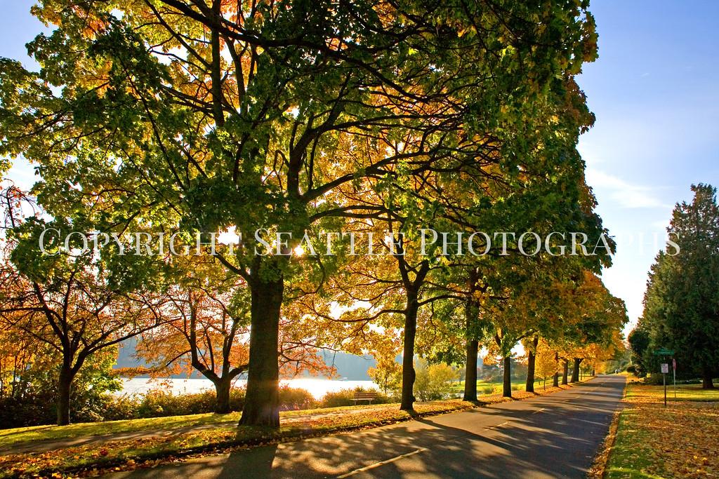 Lake Washington Autumn 110