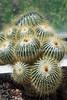 Volunteer Park Cactus 11