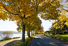 Lake Washington Autumn 134