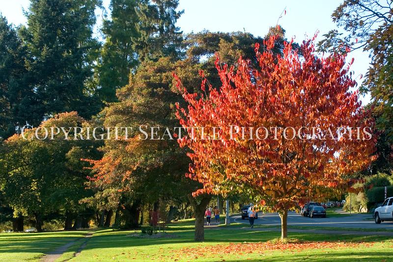 Green Lake Park Autumn 29