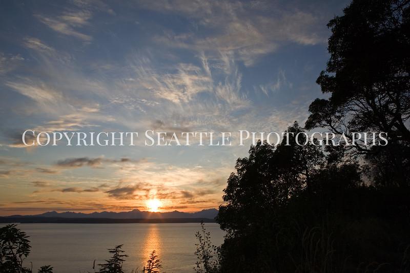 Magnolia Sunset 103
