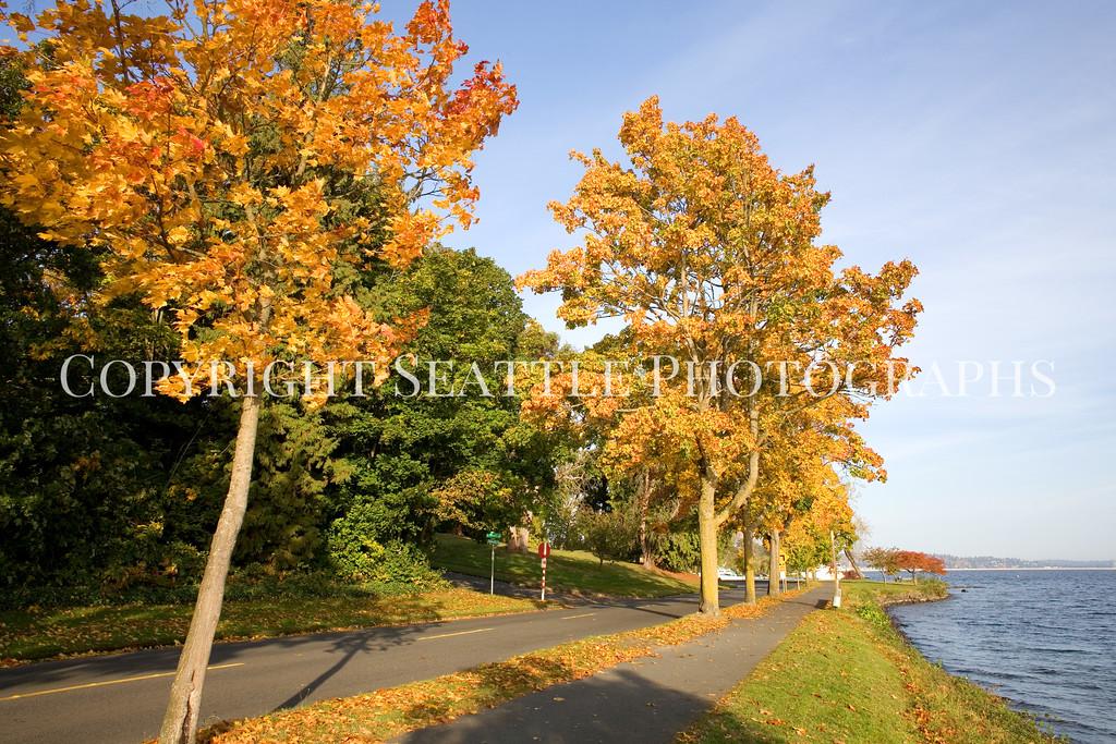Lake Washington Autumn 107
