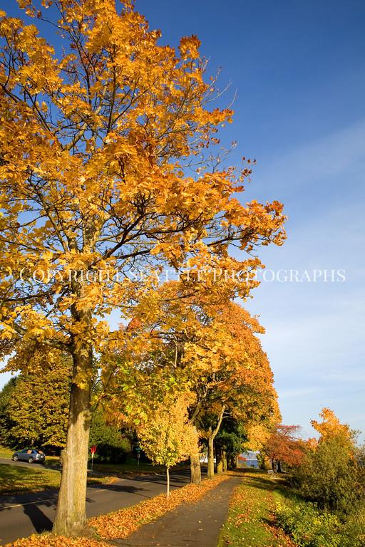 Lake Washington Autumn 117
