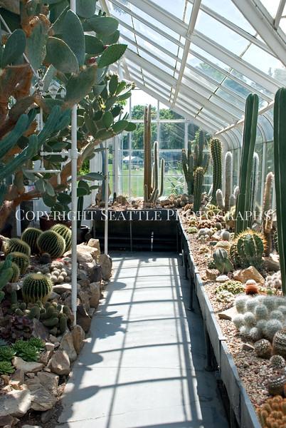 Volunteer Park Cactus 1