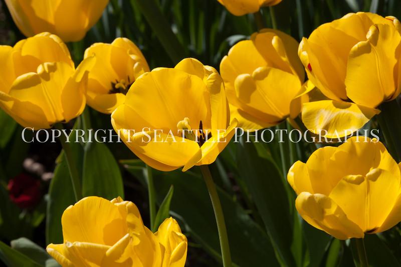 Hamilton Park Flowers 102