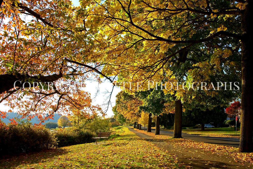 Lake Washington Autumn 111