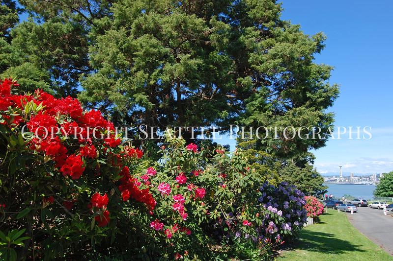 Hamilton Park Flowers 1