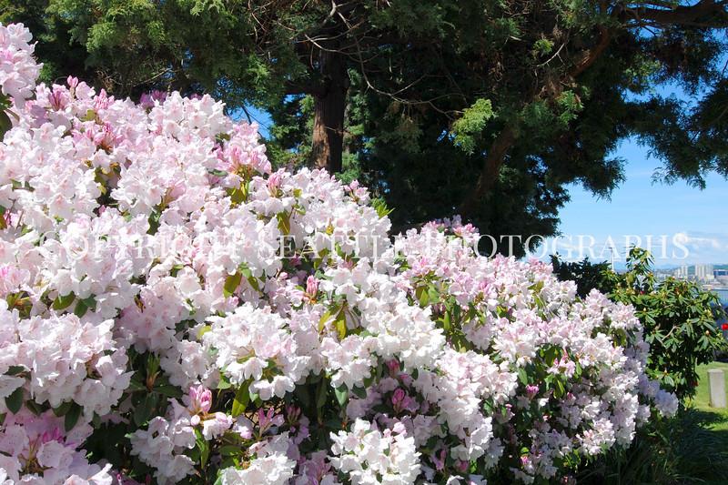 Hamilton Park Flowers 14