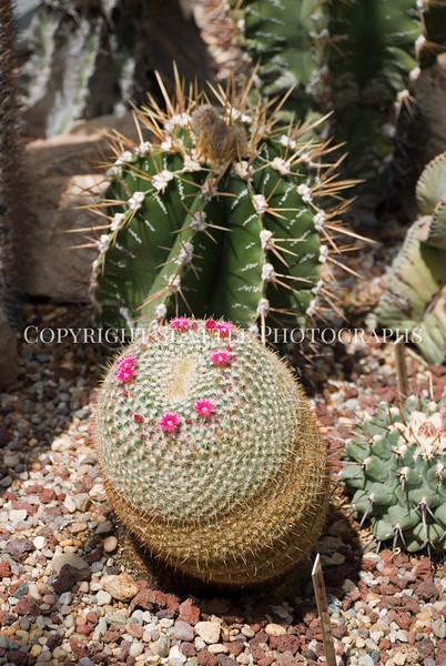Volunteer Park Cactus 10