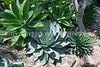 Volunteer Park Cactus 3