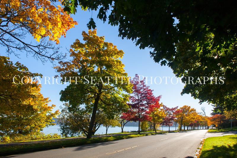 Lake Washington Autumn 136