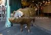 Rachel the Brass Pig 101