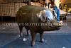 Rachel the Brass Pig 105