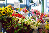 Pike Place Market Flowers 108