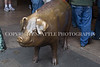 Rachel the Brass Pig 134