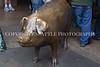 Rachel the Brass Pig 134