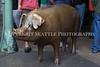 Rachel the Brass Pig 135