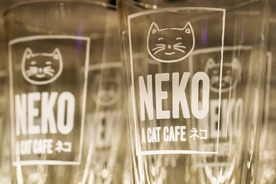 Neko Cat Cafe in Capitol Hill, Seattle