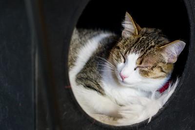 Neko Cat Cafe in Capitol Hill, Seattle