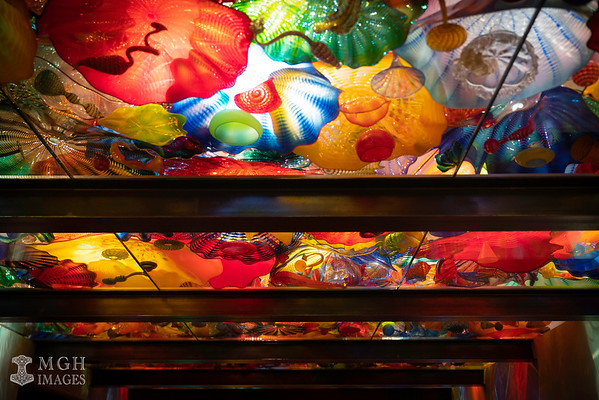Chihuly_Glass-11