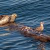 Seal and Gull Sharing