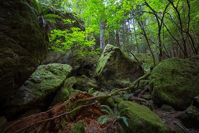 Mossy Rocks at Mt. Si