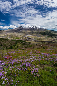 Mt. St Helens with Wildflowers