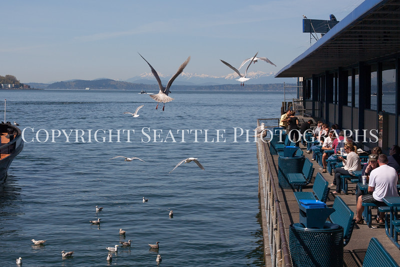 Waterfront Seagulls 102