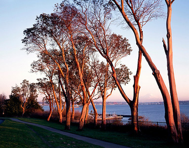 Magnolia Park, Seattle