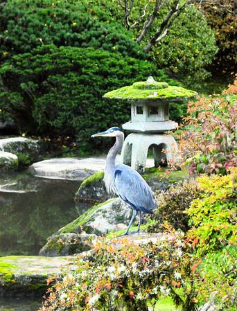Japanese Garden  November 2015