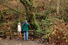 Visitors come to Carkeek Park to view the spawning chum and coho salmon in Pipers Creek.
