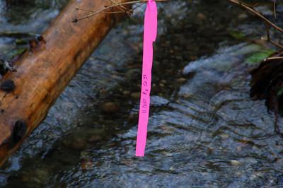 Carkeek Park 11-27-07 (salmon)