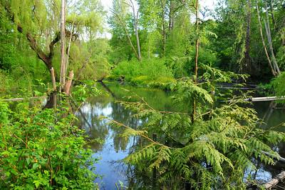 Longfellow Creek - Near Graham Street