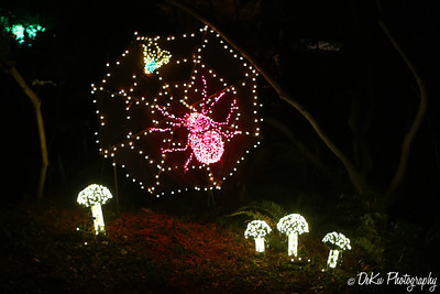 XmasLights(web)_0003