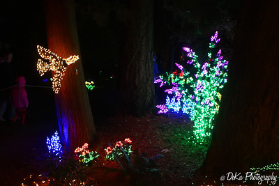 XmasLights(web)_0006