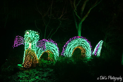 XmasLights(web)_0035